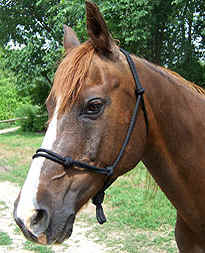 example of large/draft size heavyweight 5mm halter