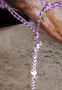 Horse Training guide images - step 4