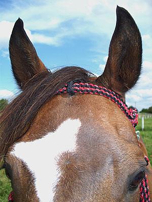 Little Joe Horse Gear headstall close-up