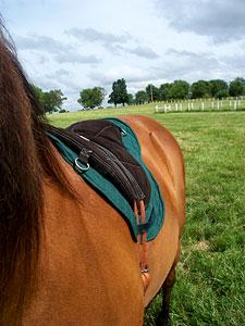 closer look at Little Joe Horse Gear saddle