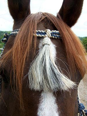 Little Joe Horse Gear forehead tassel