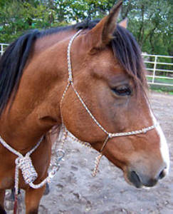 Little Joe Horse Gear halter
