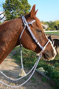 Little Joe Horse Gear headstall