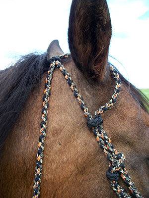 Little Joe Horse Gear double ear headstall close-up