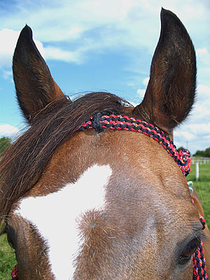 Little Joe Horse Gear headstall close-up