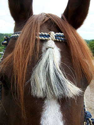 Little Joe Horse Gear forehead tassel