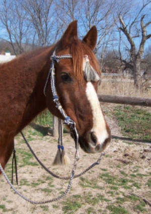 Little Joe Horse Gear headstall with bit